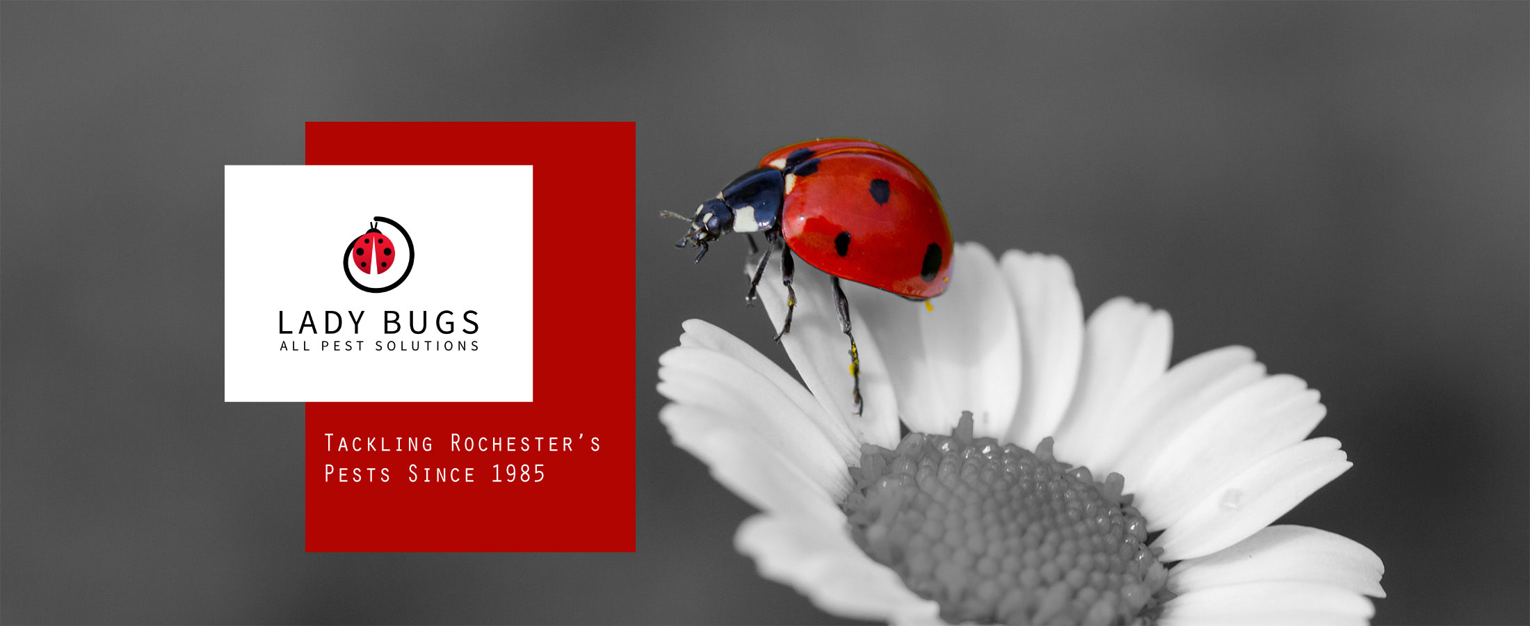 lady bug pest logo on picture of daisy with lady bug